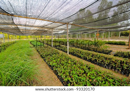 The rows of young plants growing - stock photo
