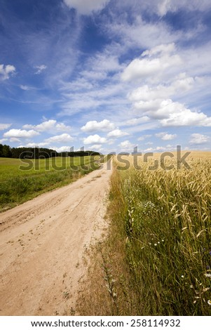 the rural road   - stock photo
