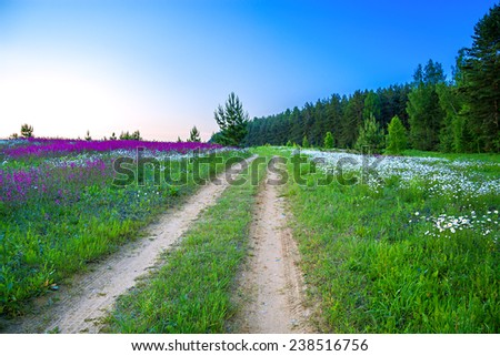 the rural summer landscape with sunrise, by the blossoming meadow and the road - stock photo