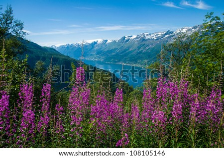 The S�¸rfjord with flowers in the foreground, Norway - stock photo