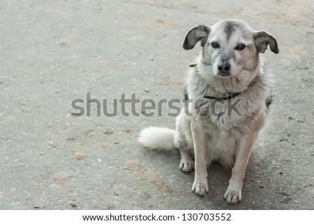 The sad lonely homeless dog waiting - stock photo