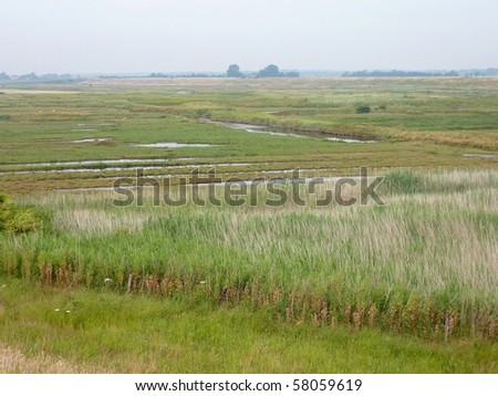 The salty wetlands in Zealand in the Netherlands