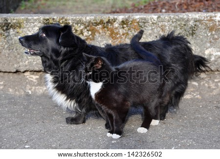 The same color dog and a cat standing next huddled together.