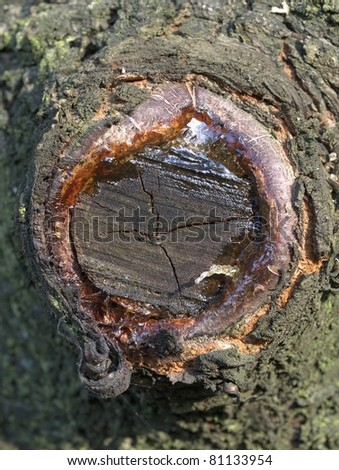 The scar on trunk - stock photo