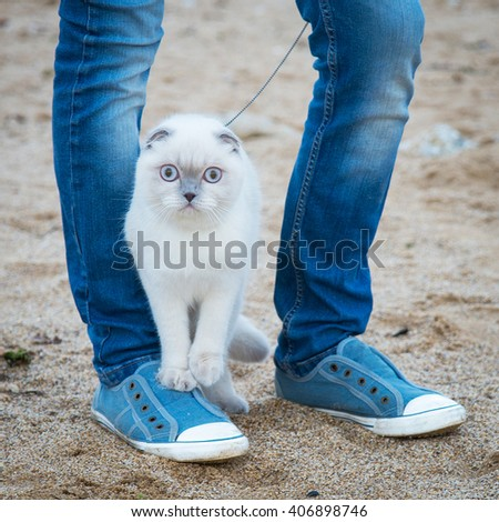 the Scottish cat is on the sneakers owner on the beach - stock photo