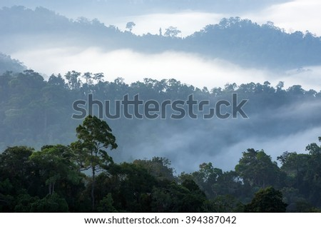 The sea of fog in the Central Valley Kaeng Krachan National Park, Phetchaburi, Thailand.