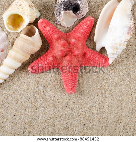 The sea shell as a background. Close-up