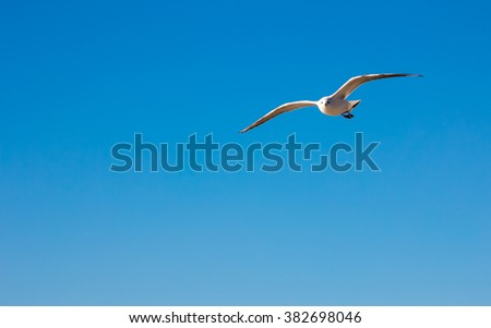 the seagull flying on the blue sky - stock photo