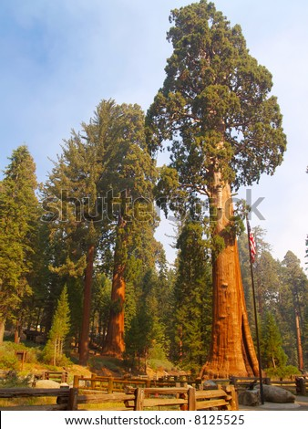 The Sentinel, a giant sequoia in Sequoia National Park - stock photo
