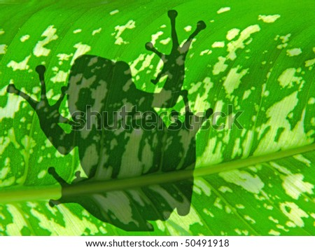 the shadow of frog silhouette over the green plant background - stock photo