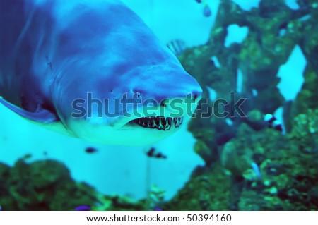The shark floating in the aquarium - stock photo