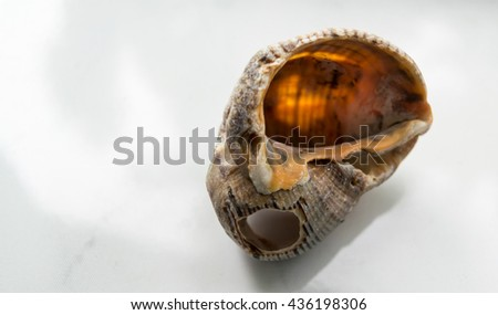 the shell of a sea snail - stock photo