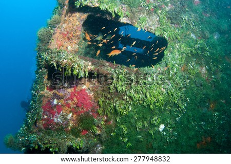 The shipwreck covered with seaweed underwater - stock photo