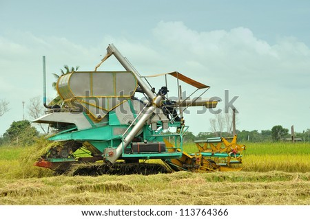 The side-view of farm worker harvesting rice - stock photo