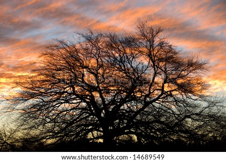 The silhouette of a large oak tree against the setting sun