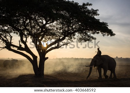 The silhouette of a person riding an elephant in a field near trees at the sunset time, Elephant village Thailand. - stock photo