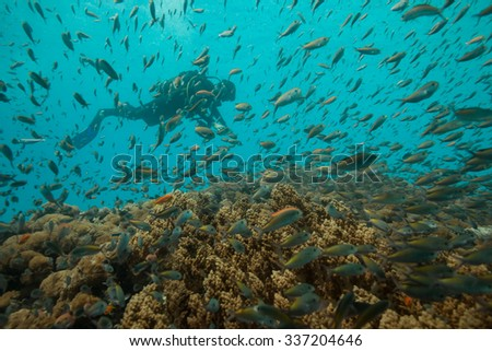The silhouette of a scuba diver clouded by a vast school of colorful reef fish on a healthy reef near Zanzibar, Africa - stock photo