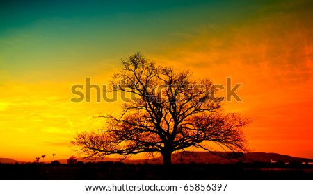 The silhouette of lonely tree at sunset