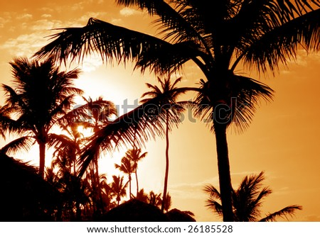 The silhouettes of a bunch of palm trees shot against the setting sun.