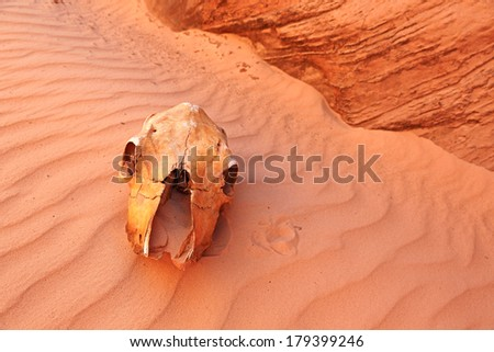 The skull of an animal is shown on a sandy dune in desert - stock photo