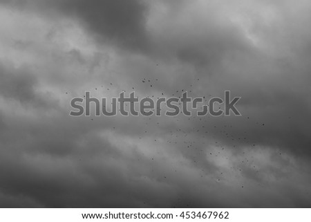 The sky before the storm and birds - stock photo