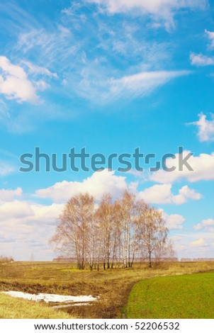 The sky over the field and birches