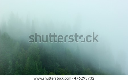 The slope of the hill forest in the fog.