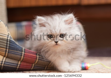 The small fluffy kitten lies in his bed - stock photo