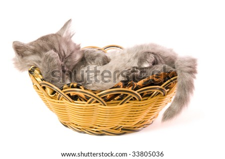The small grey fluffy kitten sleeps in a basket on a white background close