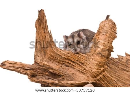 The small hamster sits on a tree. - stock photo