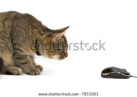 The small kitten plays with the computer mouse. - stock photo