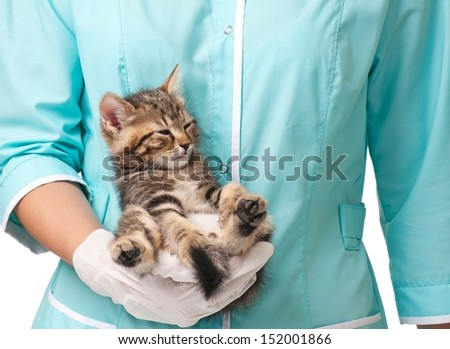 The small kitten recovers after an anesthesia on hands at the veterinarian