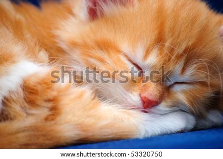 The small kitten sleeps. A close up - stock photo