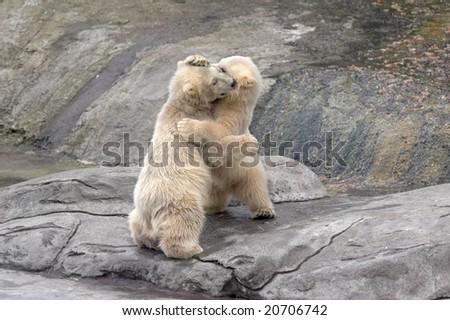 The small polar bears  on stones - stock photo