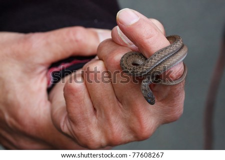 The snake ring - stock photo