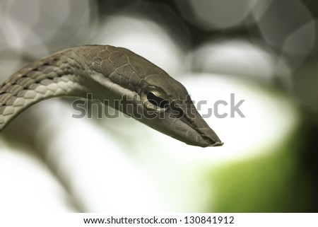 The snakes that eat out at night and during the day - stock photo