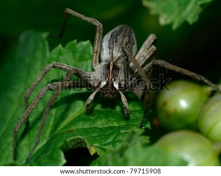 The spider - stock photo