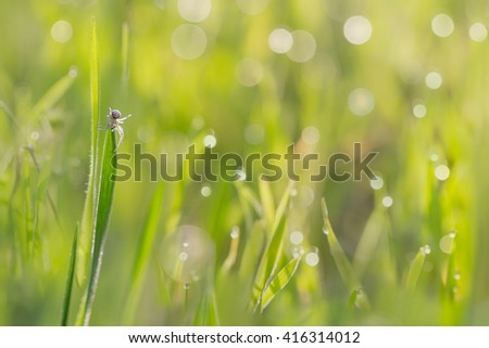 the spider in grass with droplets of dew in the morning sun.  soft focus, shallow DOF.