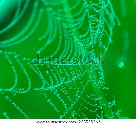 The spider web (cobweb) closeup background.  - stock photo