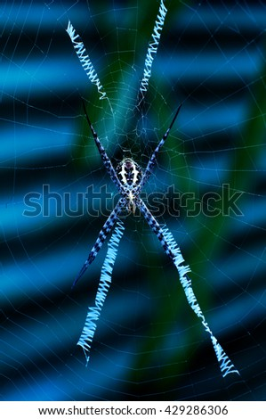 the spider with the cobwebs - stock photo