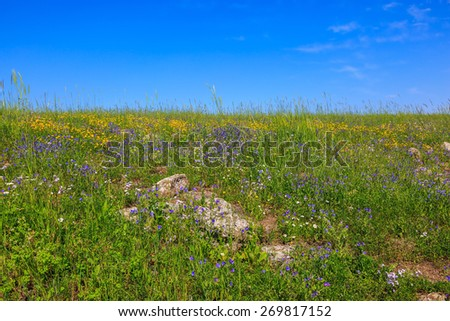 The spring blossoming Golan heights. The hills are covered with a continuous carpet of wild flowers - stock photo
