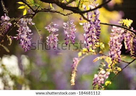 the spring flower - stock photo