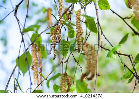 The spring leaves, branches macro background - stock photo