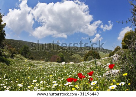 The spring meadows covered by grass, buttercups and chamomiles