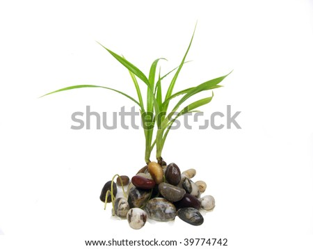 The sprout grows from stones on a white background - stock photo