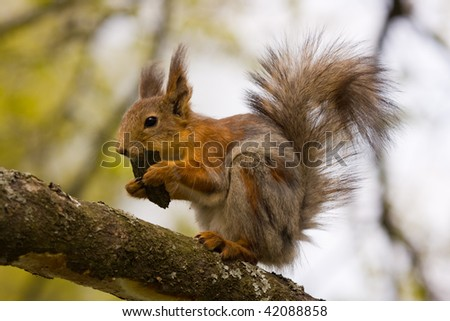 The squirrel on a tree eats bark
