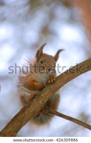 The squirrel with a dissatisfied look sits on a branch