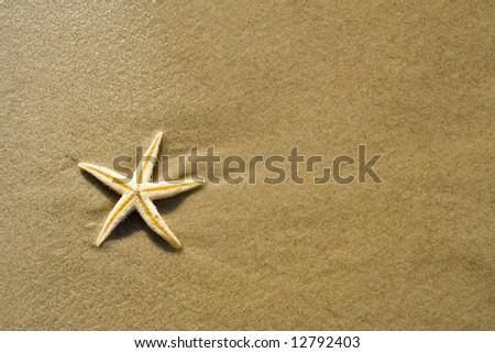 the starfish on wet sand - stock photo