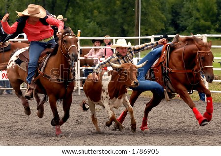 The Steer Wrestling event at the Help A Child Smile rodeo, Sept. 3/2006 in Welland, Ont. - stock photo