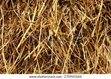 The straw background. Indian straw - stock photo